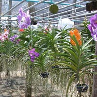 Orchid Plant 05