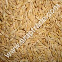 Barley Seeds