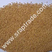Yellow Panicum Millet