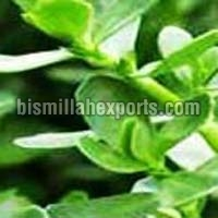 Brahmi Leaves