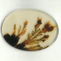 Dendritic Agate Stones