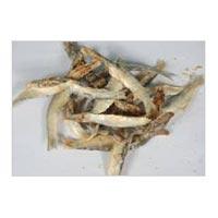 Seafood 03