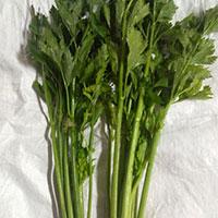 Celery Leaves  Powder