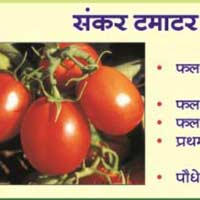 Tomato Seeds (Tasty - 1008) 01