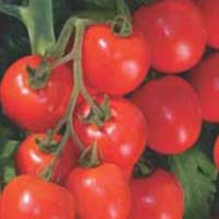 Tomato Seeds (Tasty - 1008) 02