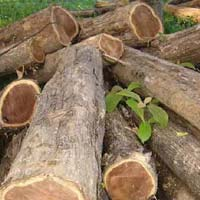 Ghana Teak Wood Logs