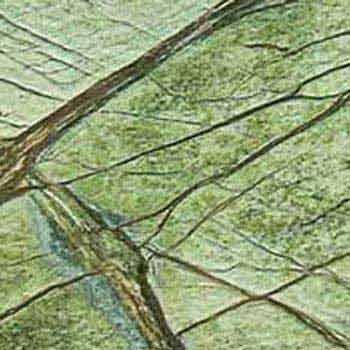 Rainforest Green Marble