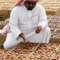 Dates (saudi arabia)