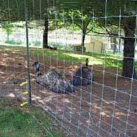 Livestock Fencing 01