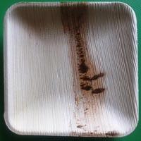 Square Areca Leaf Plates (10 Inch)