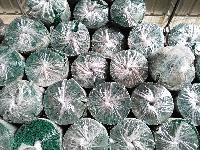 Galvanized Iron Welded Mesh Rolls 10