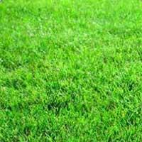 Lawn Development