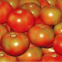 Roopa Hybrid Tomato Seeds