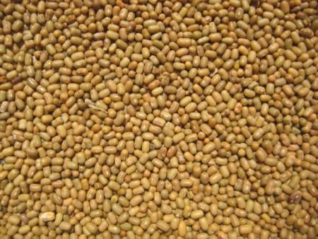 Dew Gram or Moth Bean