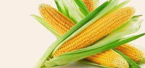 Maize Corn 02