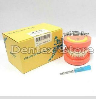 Wholesale Dental Nissin Typodont Jaw Set Supplier in
