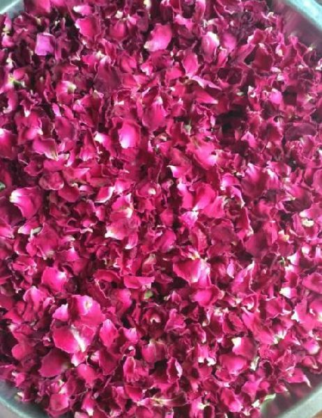 Dry Red Rose Petals 01