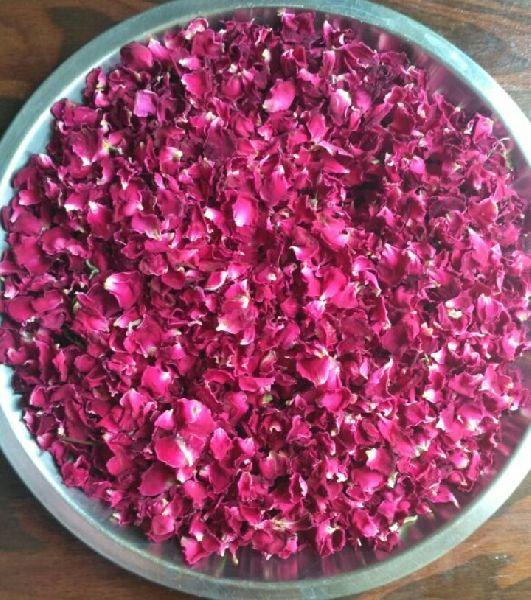 Dry Red Rose Petals 02