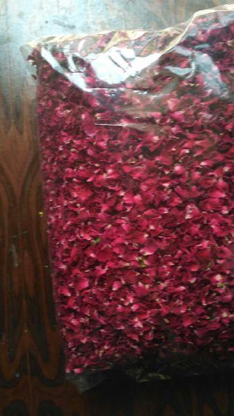 Dry Red Rose Petals 03