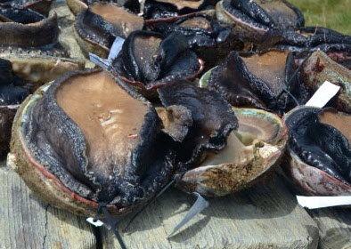 Lapa Black Chilean Abalone
