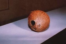 Whole coconut empty shell with fibre and hole