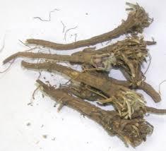 Akarkara Root 01