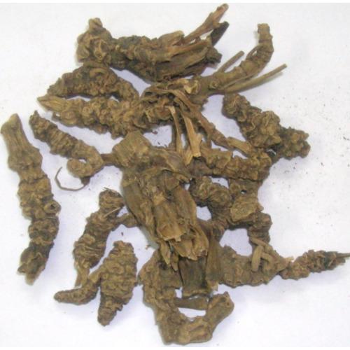Akarkara Root 02