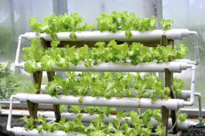 Hydroponic Installation System Services 02