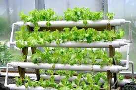 Hydroponic Installation System Services 04