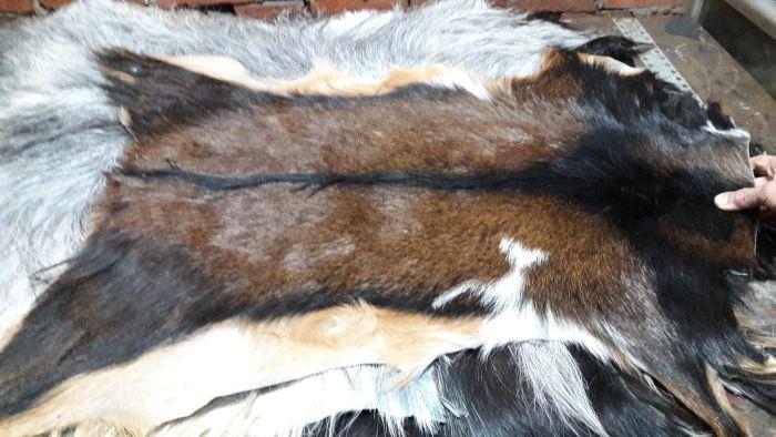 Hair On Goat Skin 04