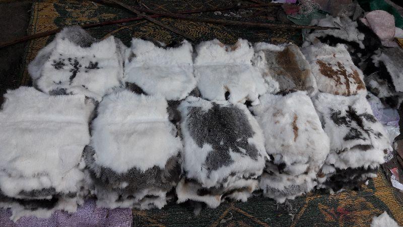Rabbit Fur
