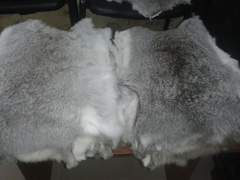 Rabbit Fur 09