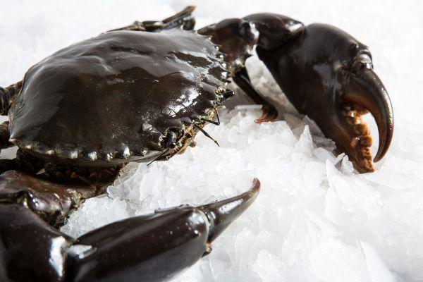 Frozen Mud Crab Supplier,Wholesale Frozen Mud Crab