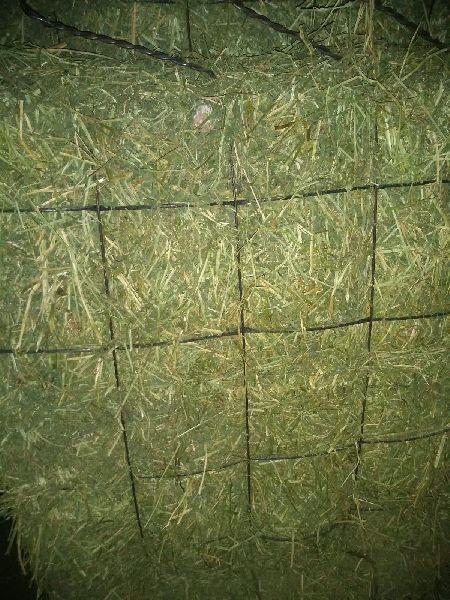 Alfalfa Hay 05