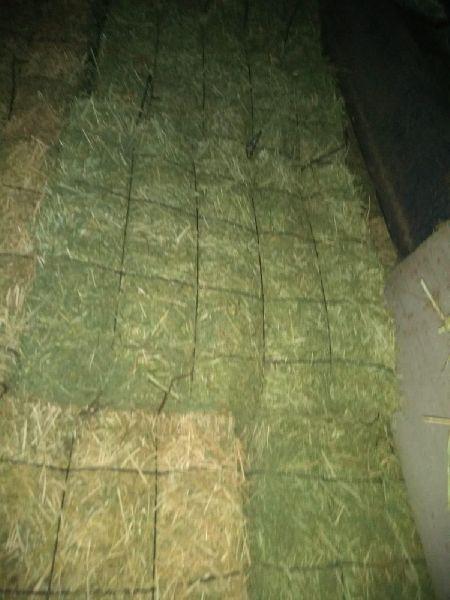 Alfalfa Hay 08