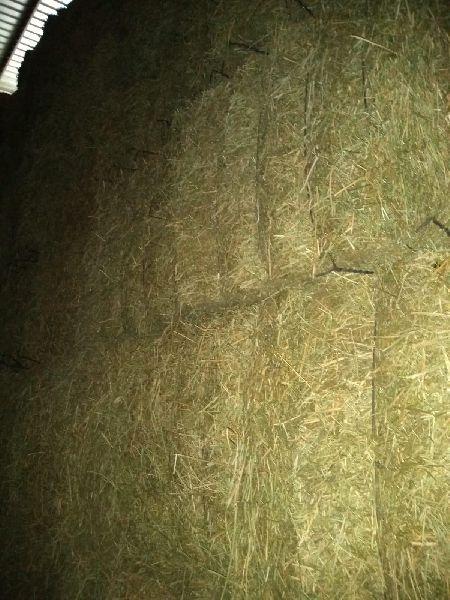 Alfalfa Hay 10
