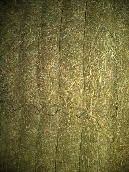 Alfalfa Hay 11