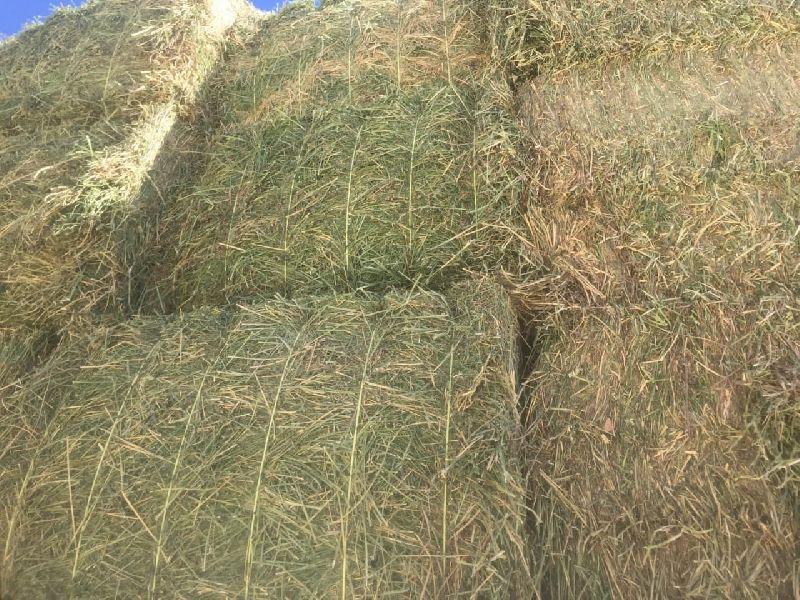 Alfalfa Hay 12