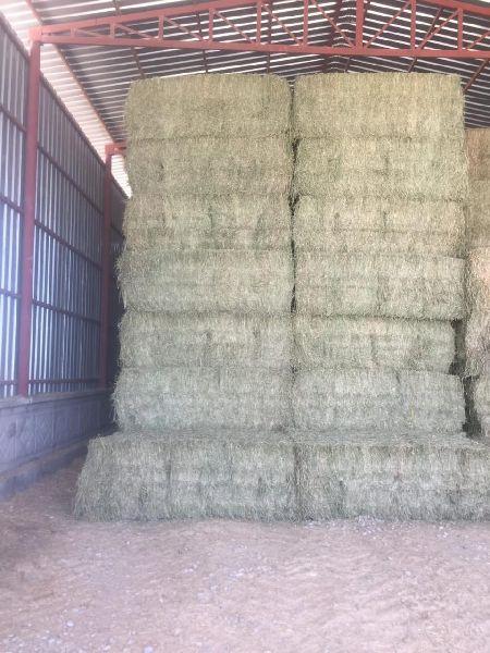 Alfalfa Hay 15