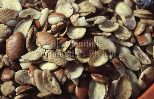 Bush Mango Seeds