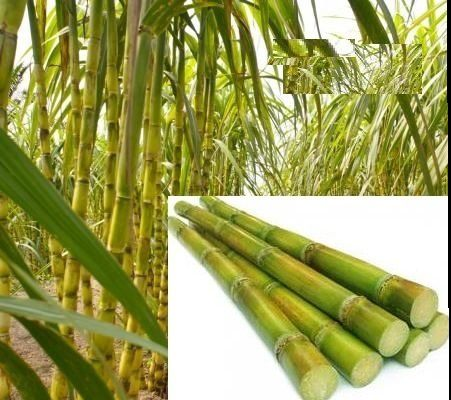 Sugar Processing Additives