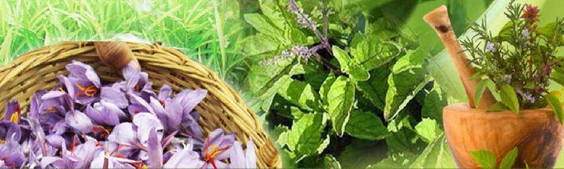 Piperita Essential Oil
