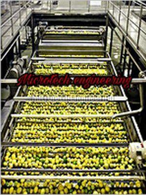 Amla Sorting Conveyor