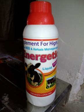 Gluconeogenic Precursor Liquid Feed Supplement