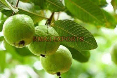 Fresh Organic Guava