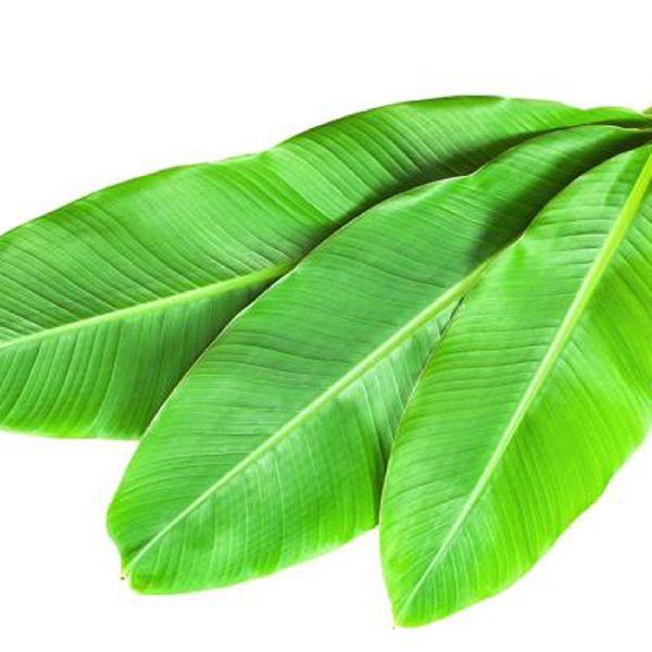 Natural Banana Leaves