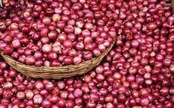 Organic Small Red Onion