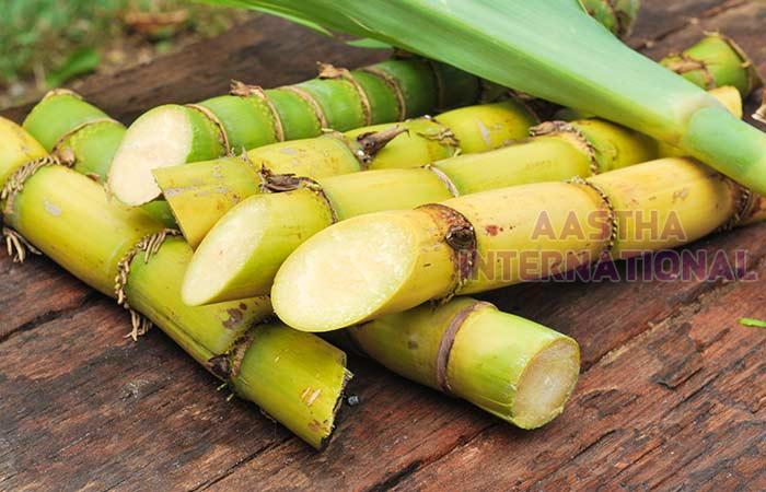 Fresh Sugarcane
