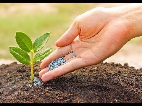 Organic Fertilizer NPK 01