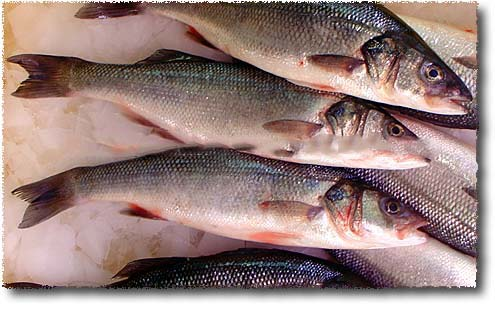 Frozen Sea Bass